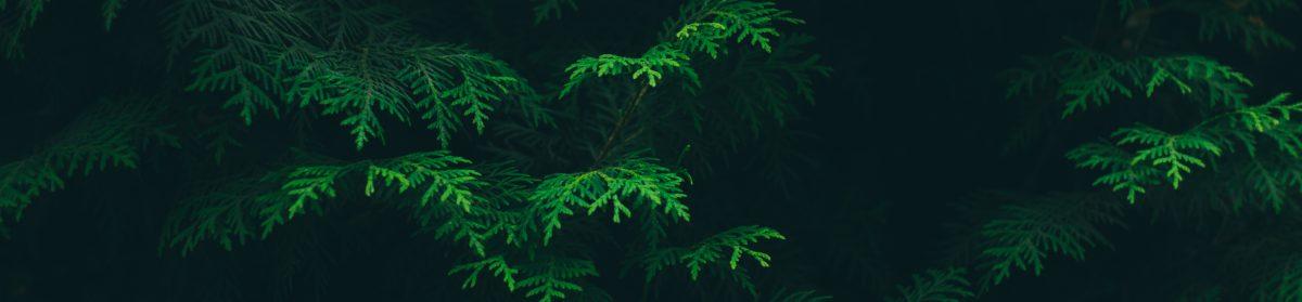Green Insomnia